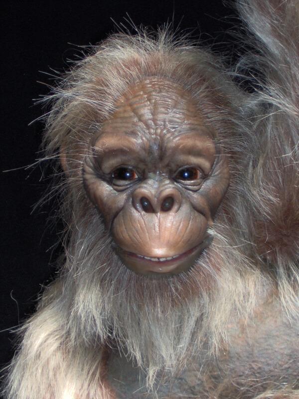 Female Dryopithecus