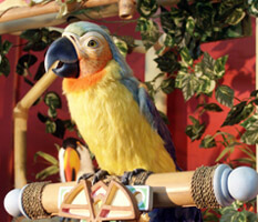 Parrot from the animated show Ragga and de Sunshine Band