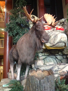 Moose from Great Wolf Lodge