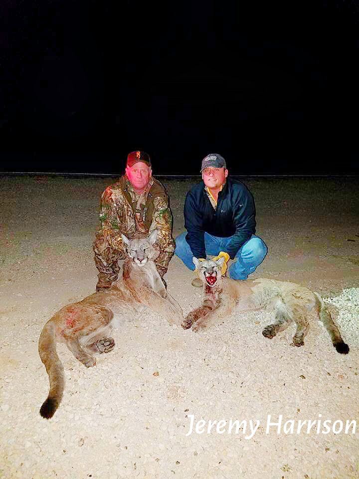 Book Your Texas Mountain Lion Hunt Today