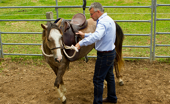 Starting a Horse Under Saddle Course