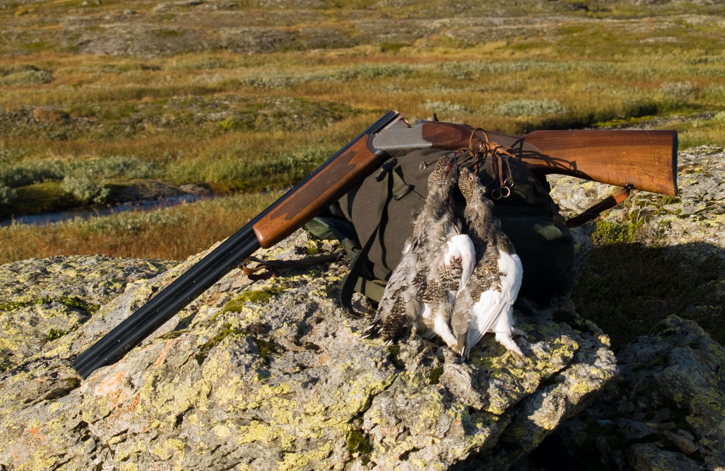 Hunting in Suldal
