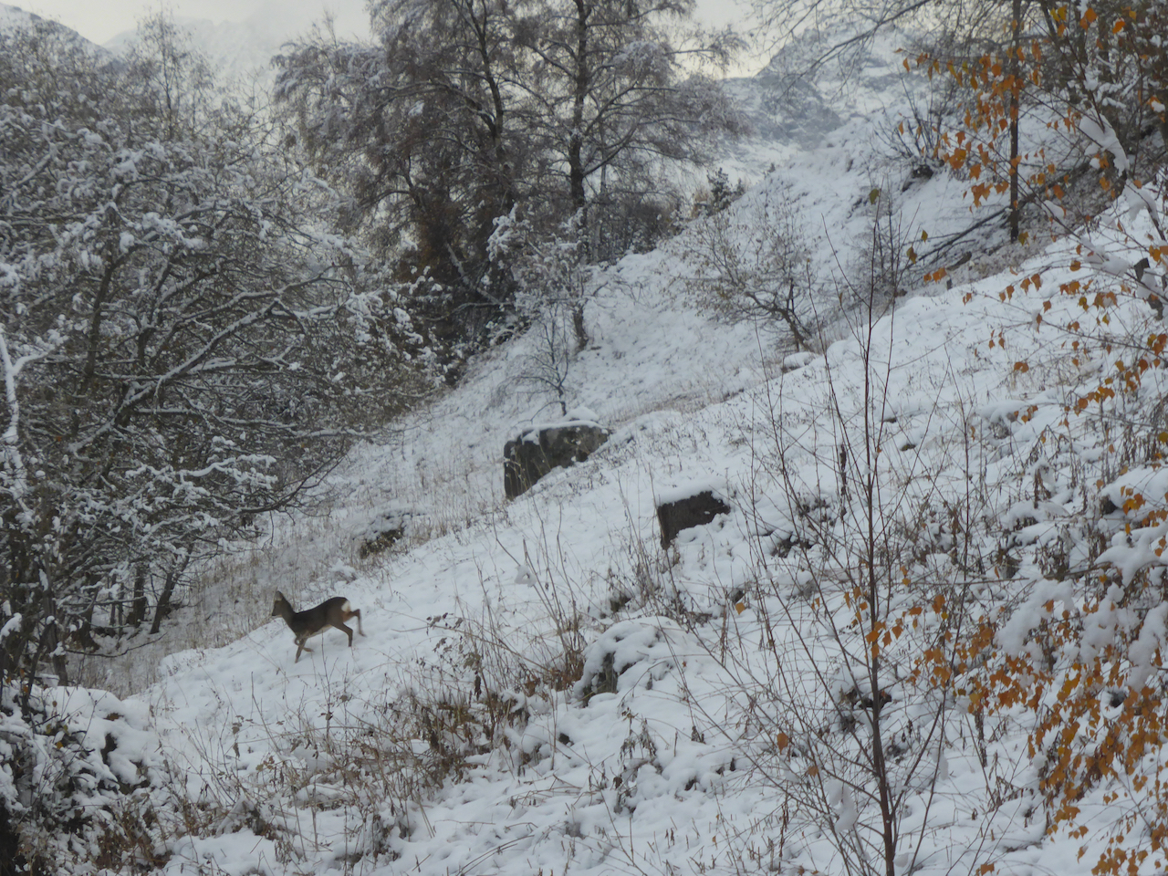 deer in winter chalet le iceberg les collons les 4 vallees