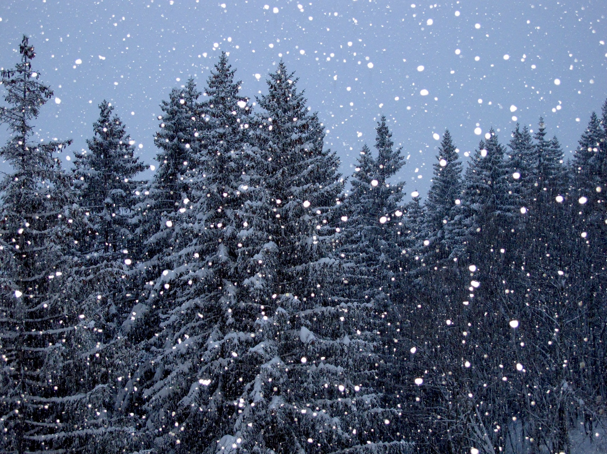 photo of forest in snow