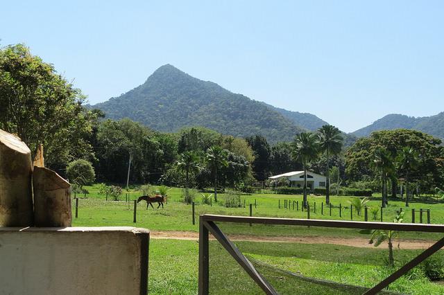 Fazenda da Reserva Botânica, pupunheira do lado esquerdo, cavalo, casa de fazenda, montanha e árvores