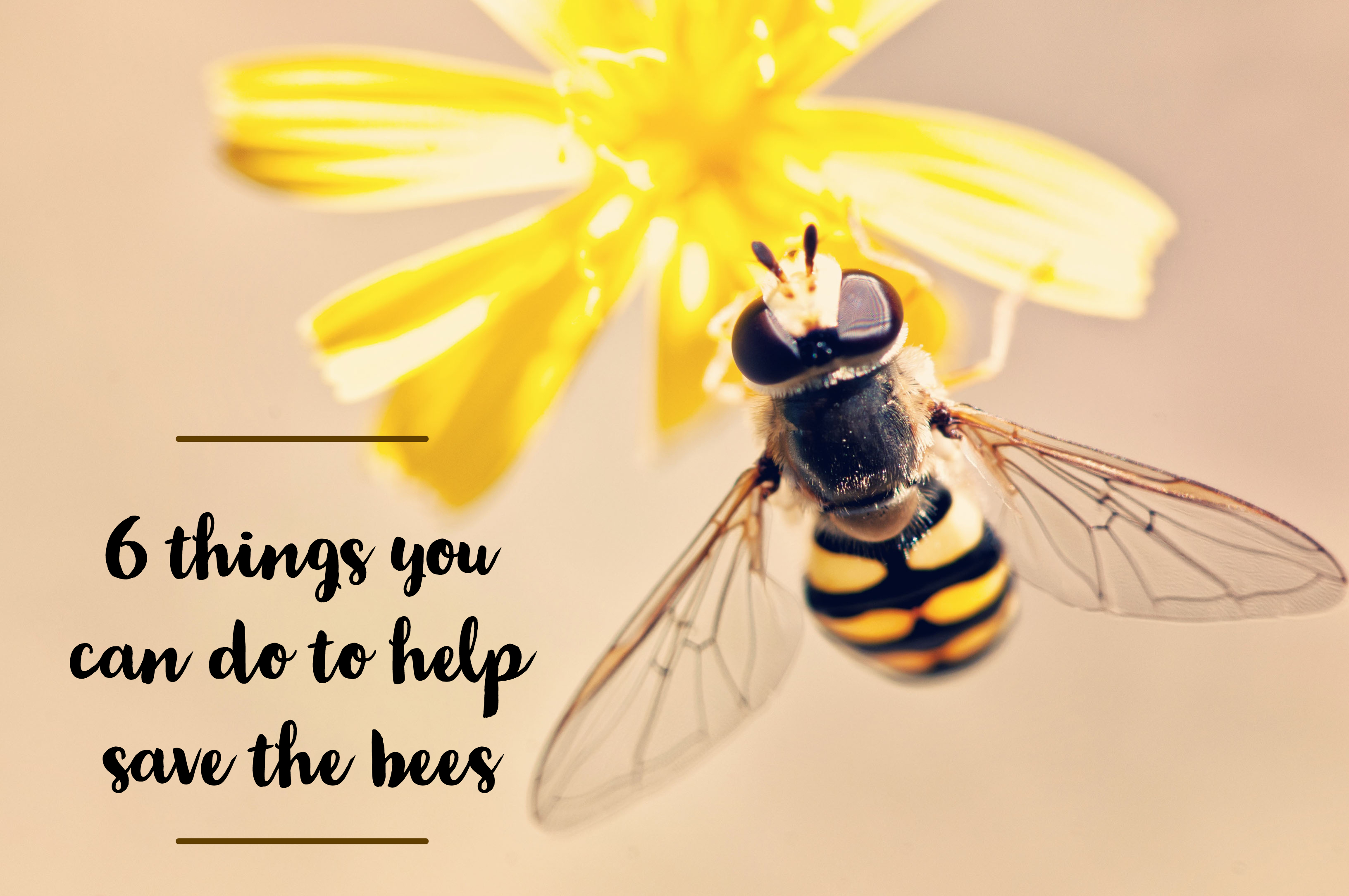 save the bees, 6 things you can do to save the bees, bumble bee, flower