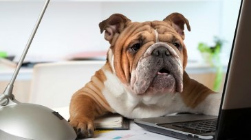 Dogs at Work Benefits Business