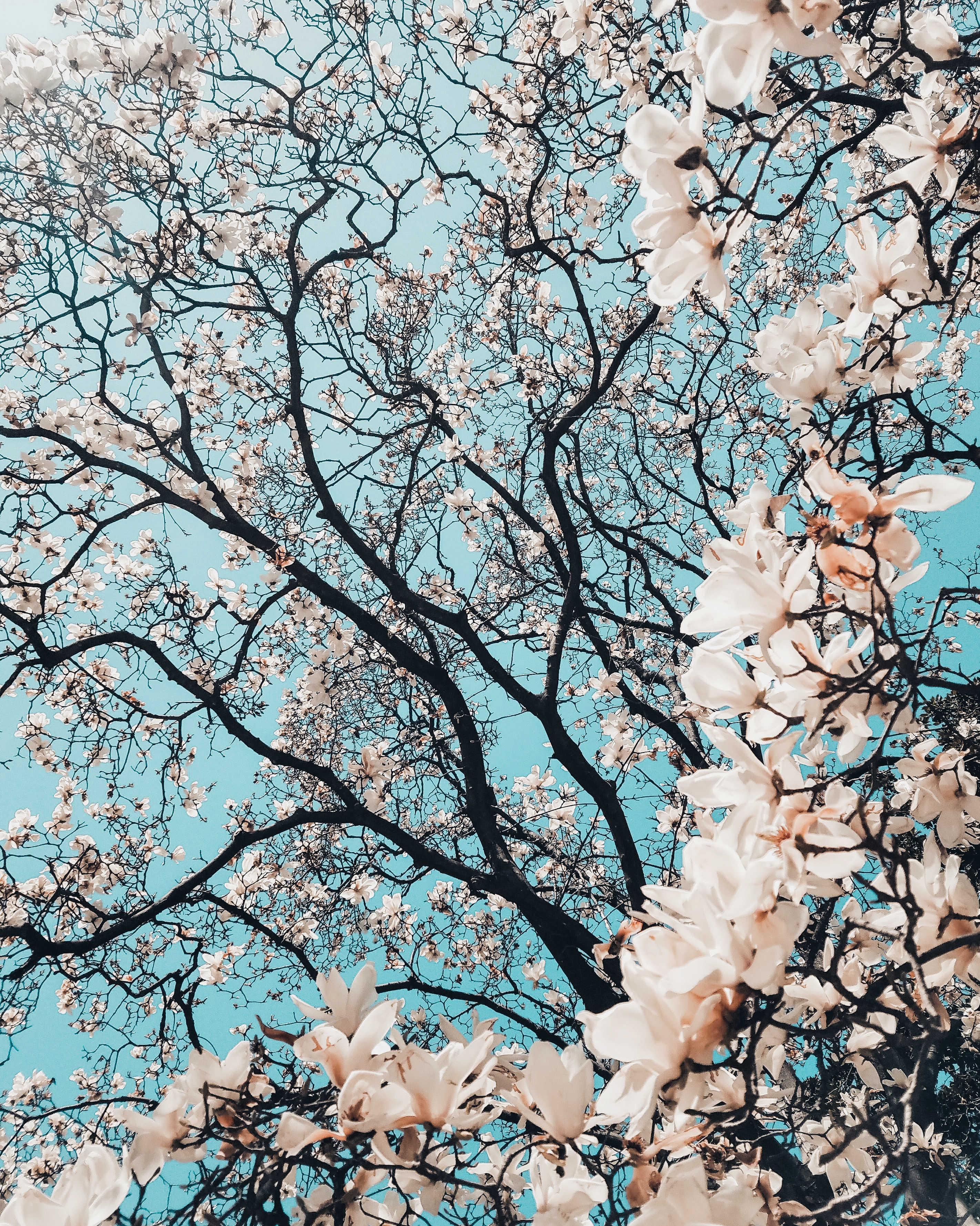 photo of cherry trees by Meriç Dağli