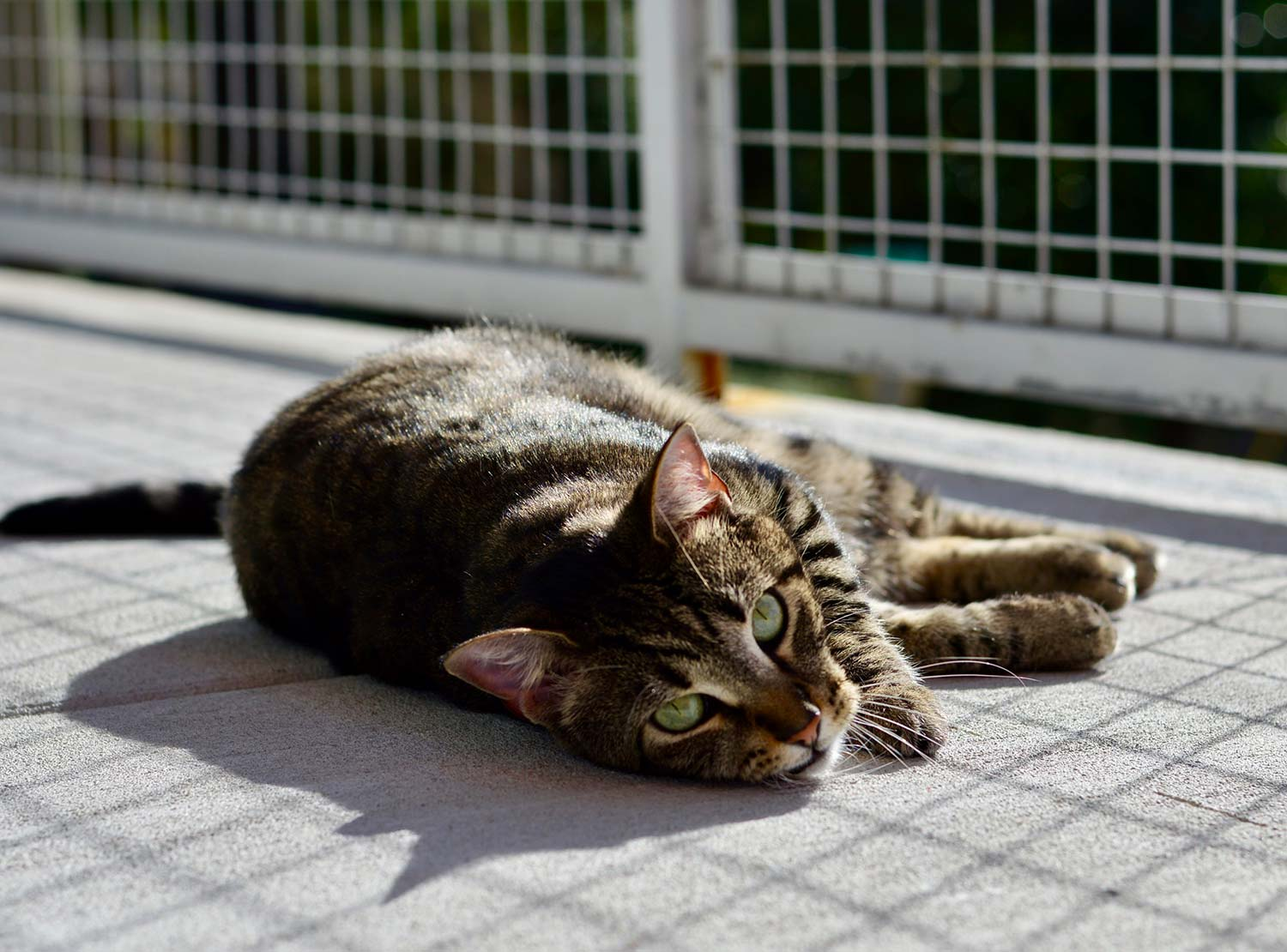 Photo of a cute cat on a balcony in the sun