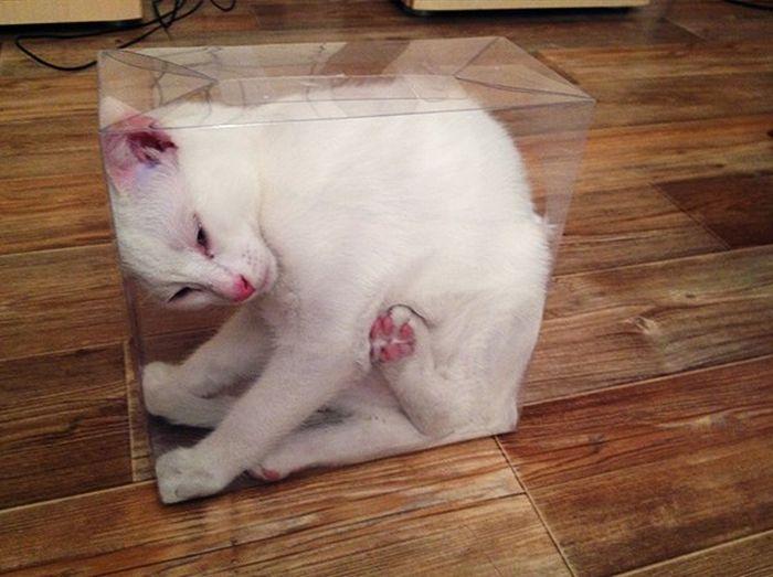 cat in clear box