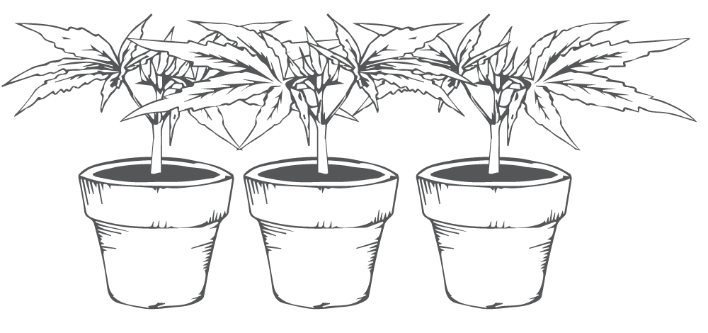 Holistic Relief By Design Potted Plants