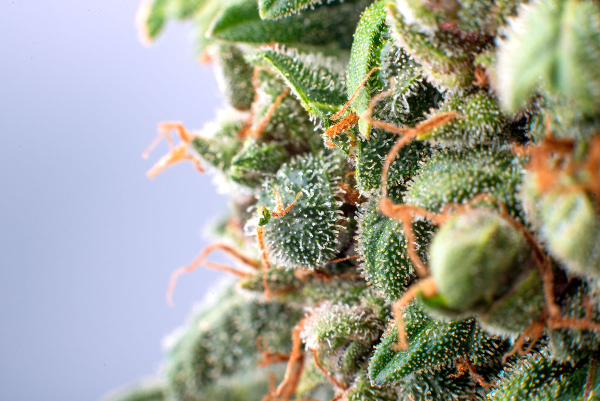 Holistic Relief By Design Ethical Cannabis