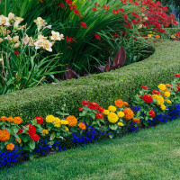 Jacksonville Landscaping Services