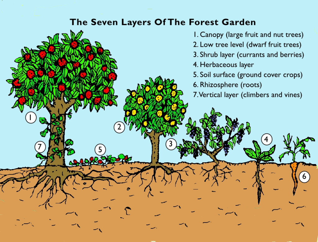 a food forest
