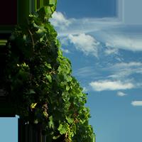 Weinbau-Weingut-Icon
