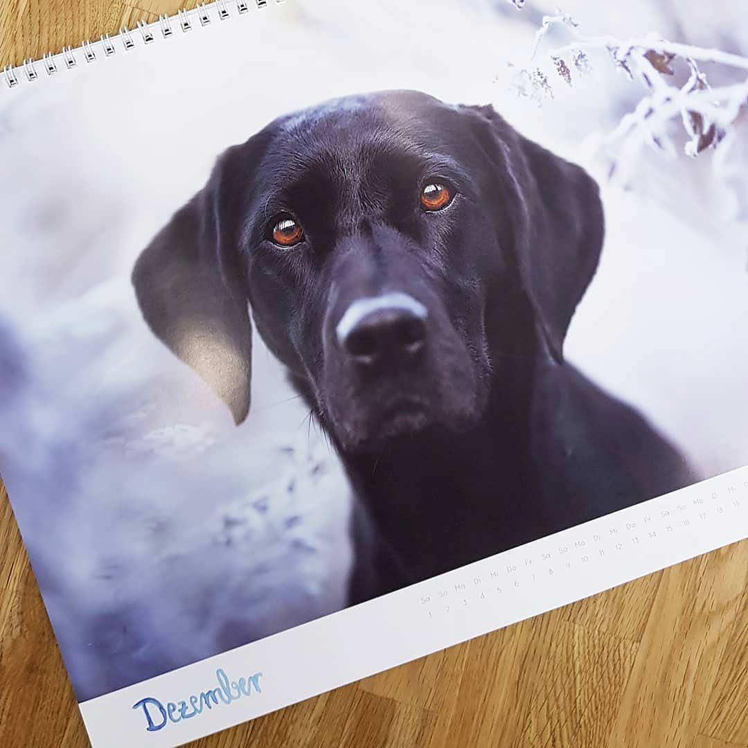 Letztes Kalenderblatt des Hunde Benefizkalender 2018 –Foto: Michaela Krenn