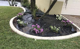Landscape maintenance service in Cape Coral and Fort Myers Florida