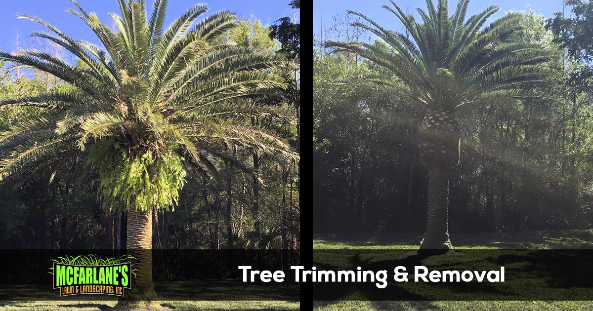 Cape Coral and Fort Myers Tree Trimming and Tree Removal Company