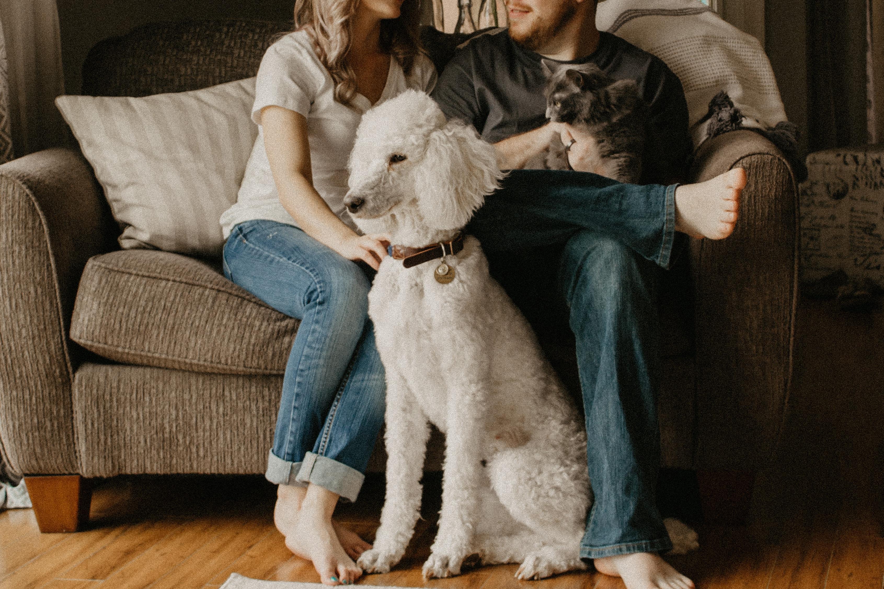 pets, dogs, cats, pet insurance, money