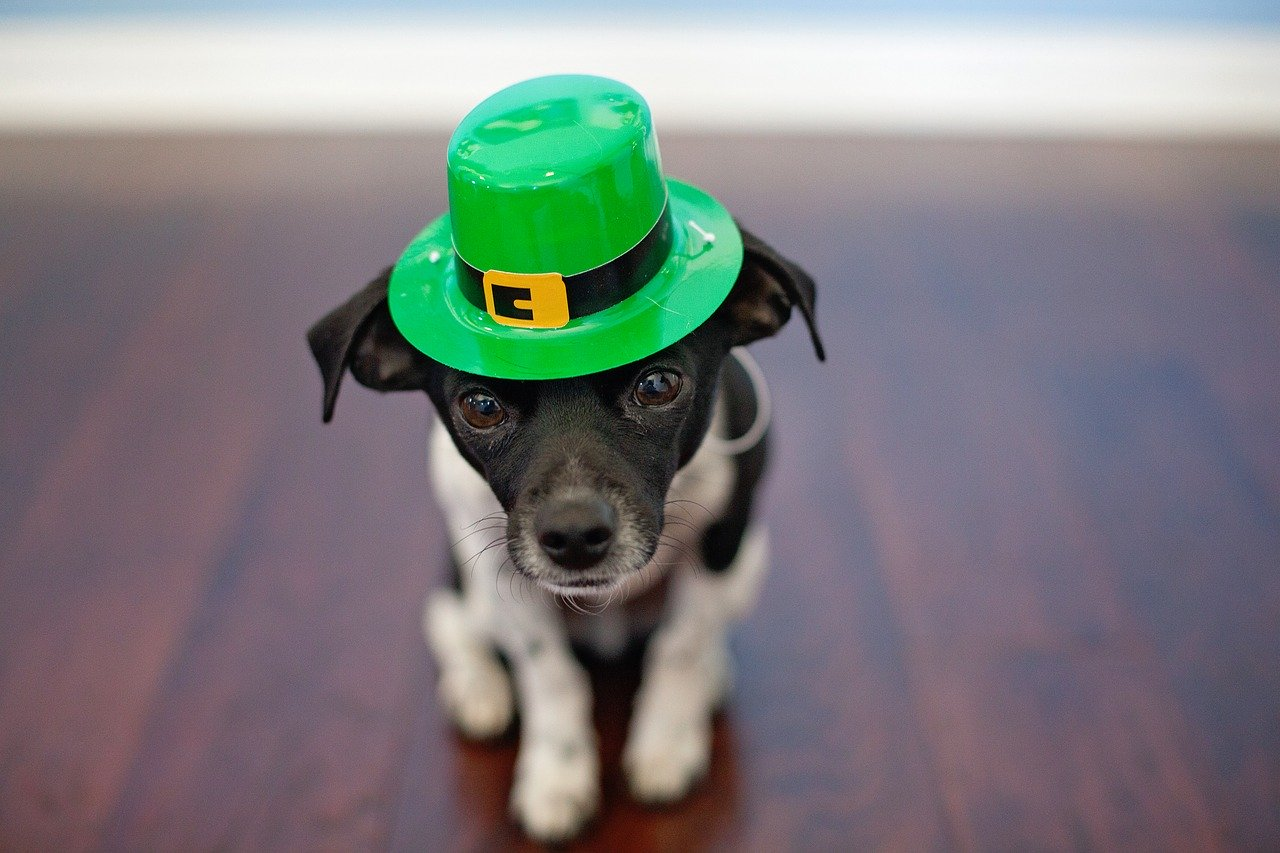st patricks day, st paddys day, going green, home insurance, florida