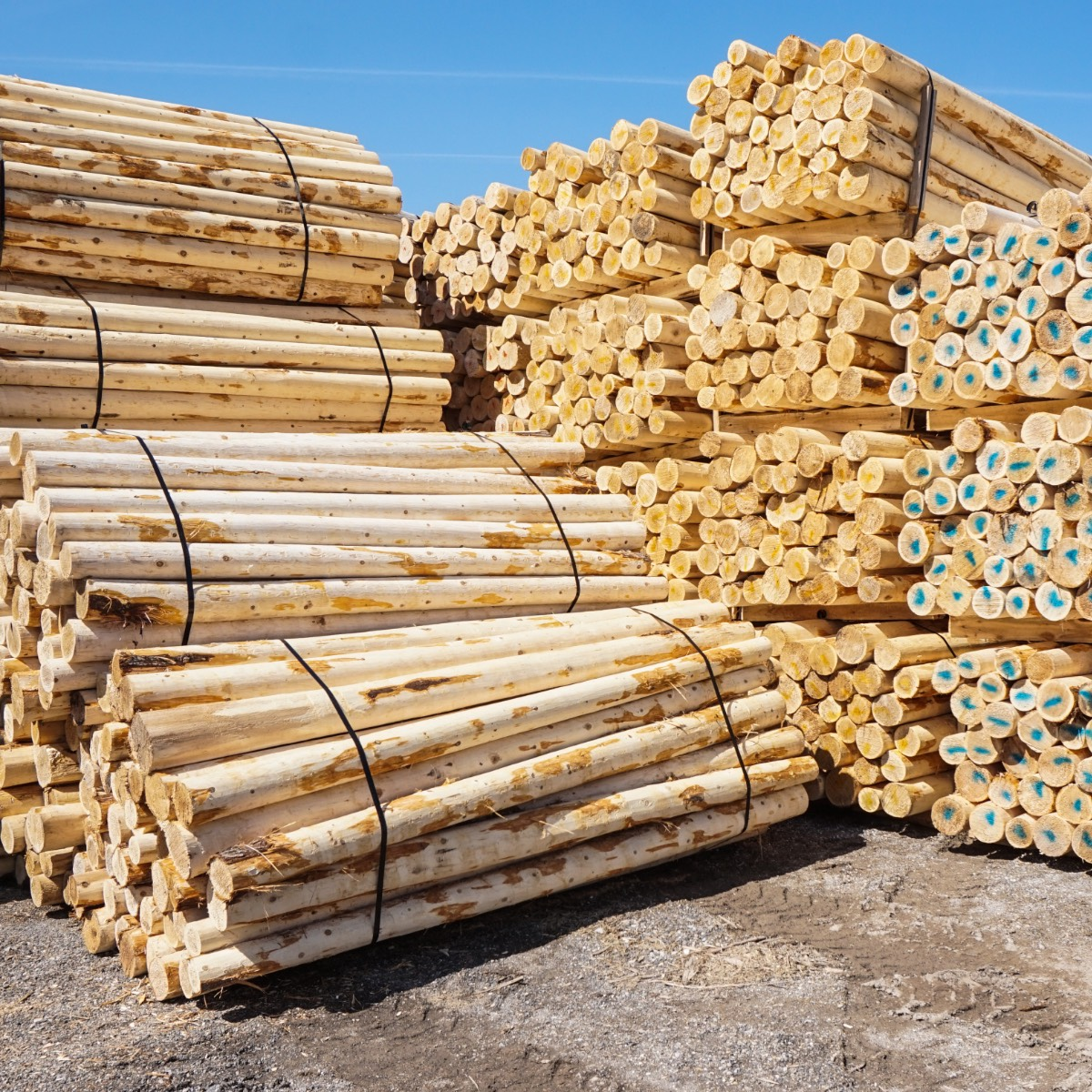 Stacks of cedar fence posts
