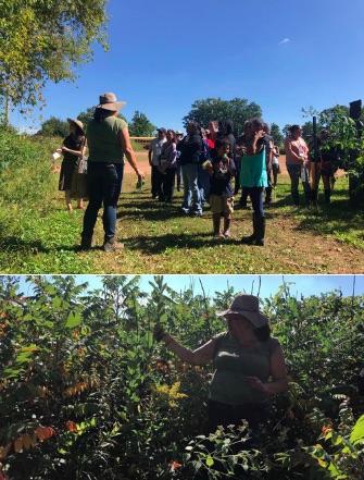 Edible plants foraging