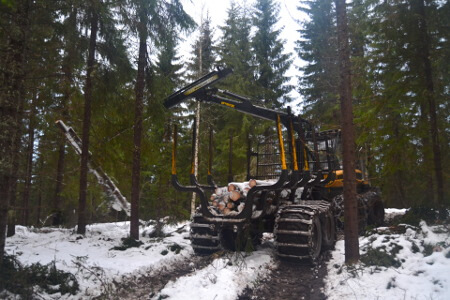 Metsäpalvelu Tavi - Kuvagalleria
