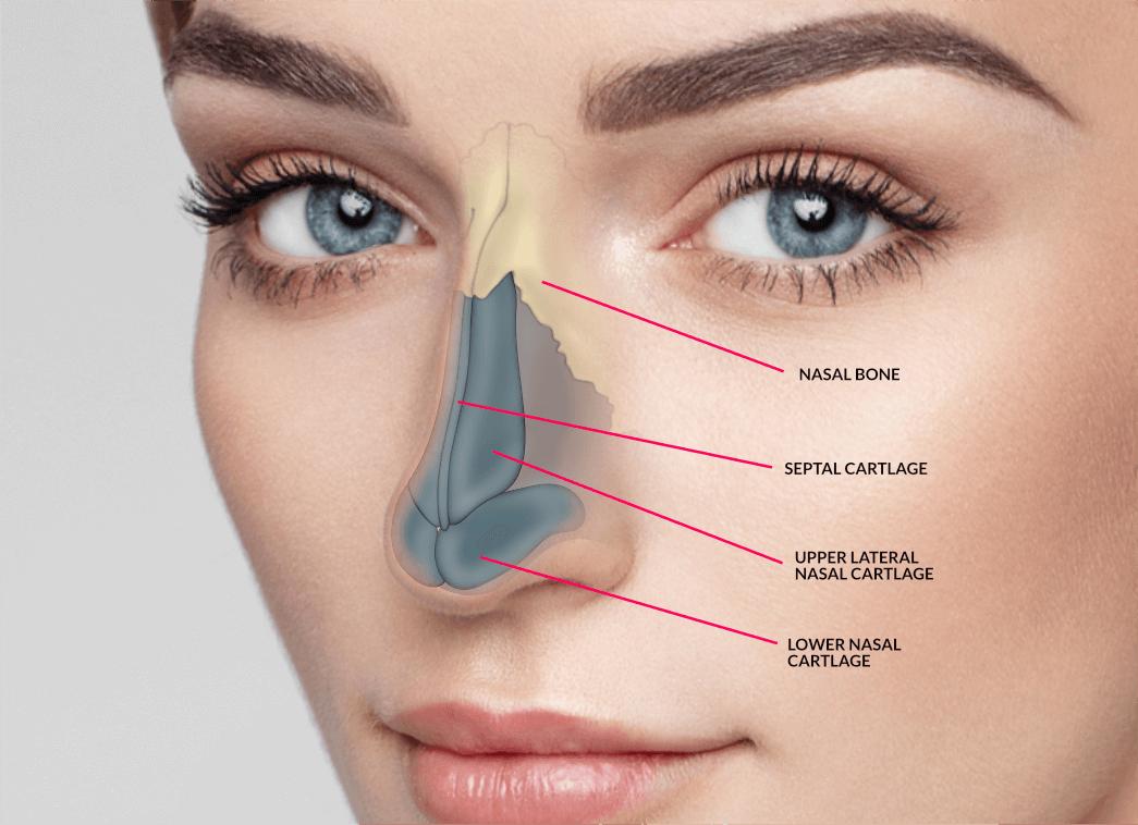 Correct nose shape 63