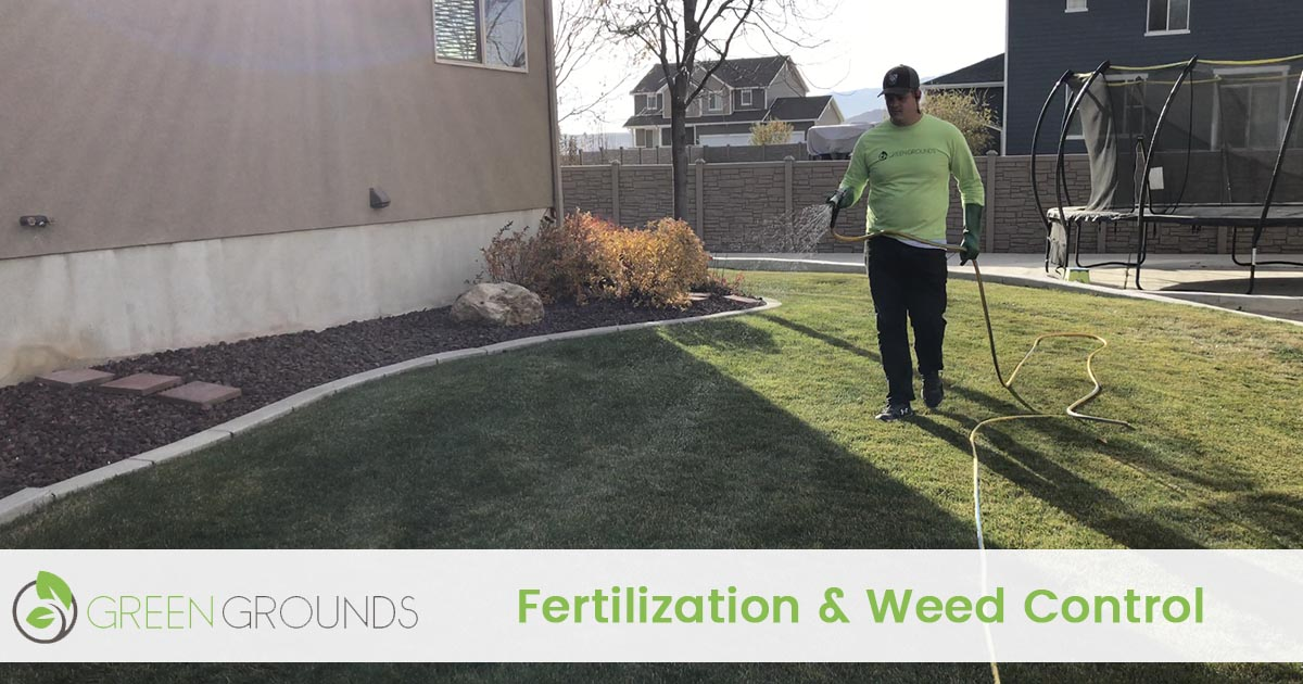 lawn fertilization and weed control service