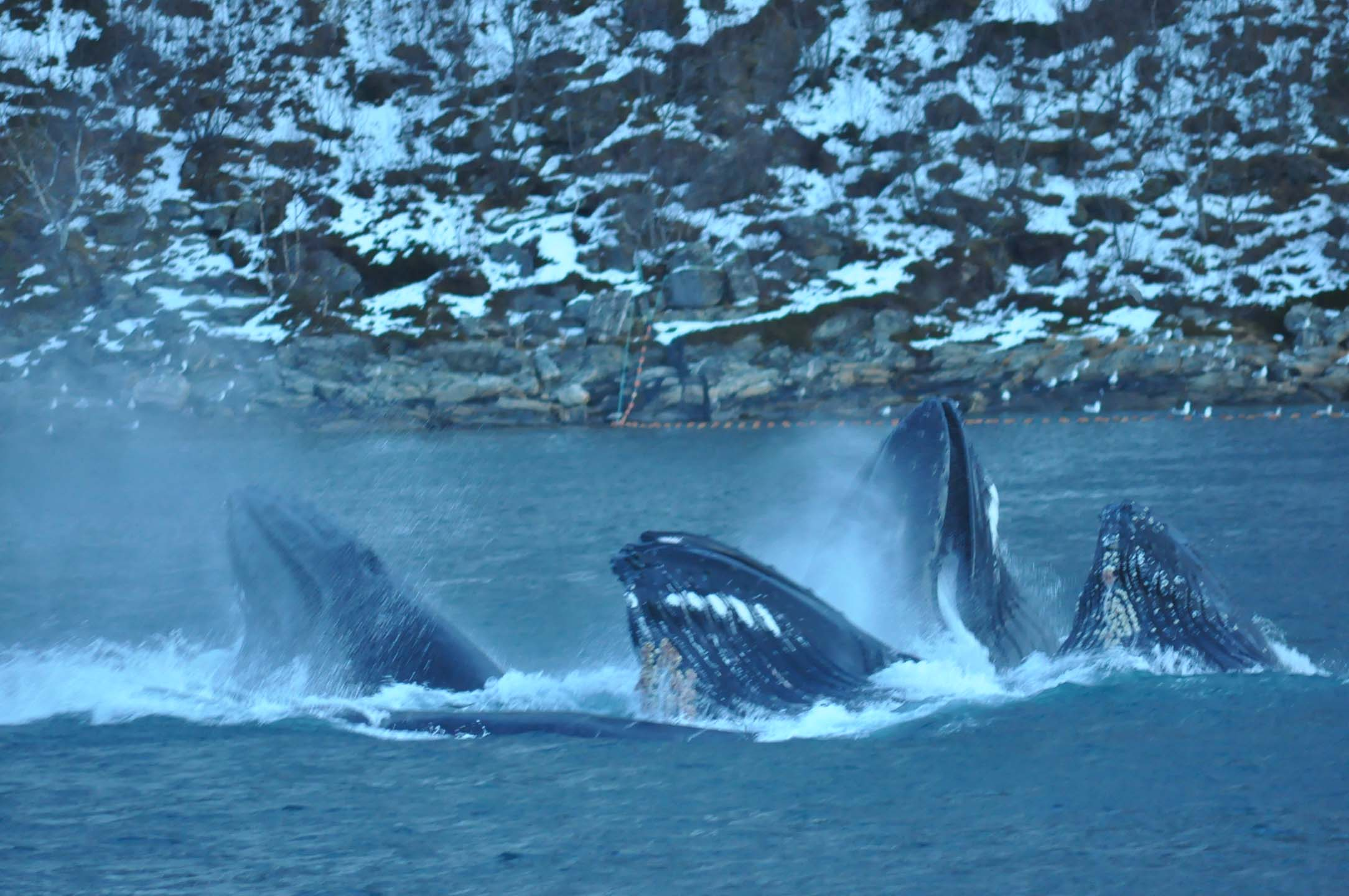 Picture of whale safari