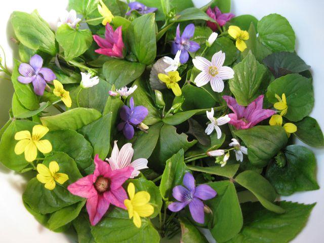 Teacher Training - Wild Food Traditions: Spring Greens