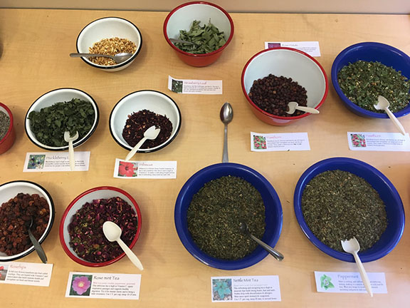 Teacher Training - Wild Food Traditions: Native Infusions & Power Snacks