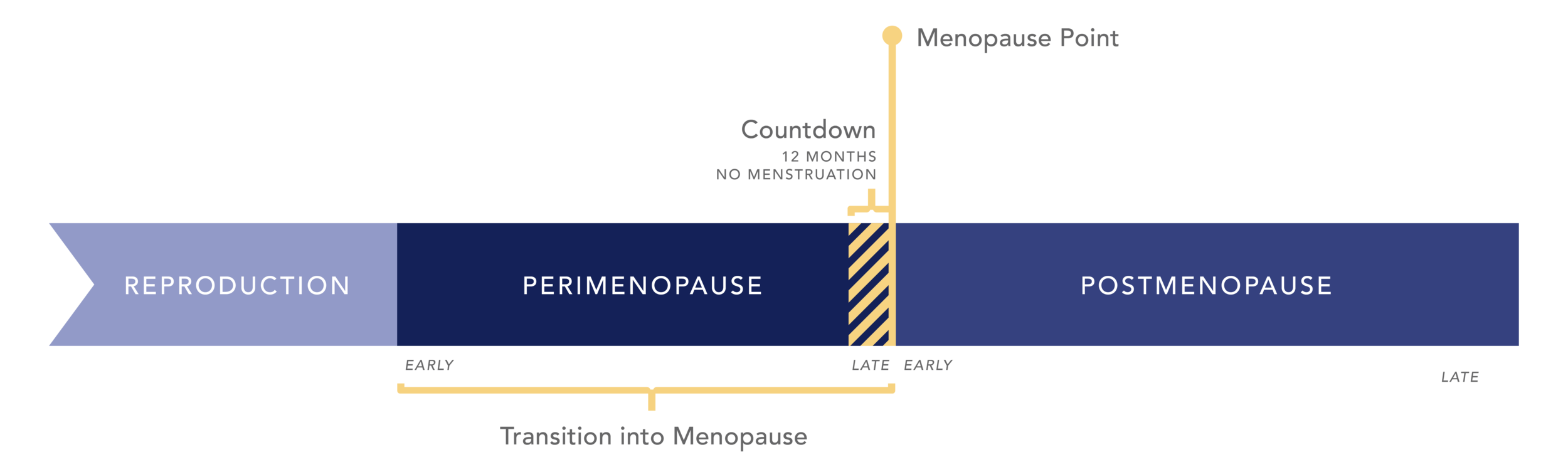 A graphical timeline of menopause