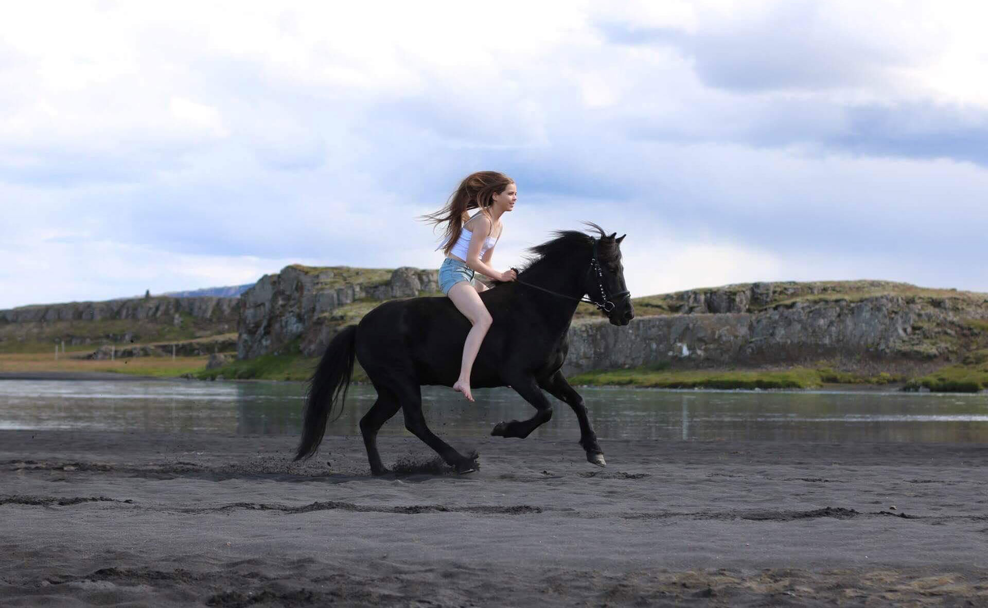 Buy Horse Icelandic riding pictures pictures trends