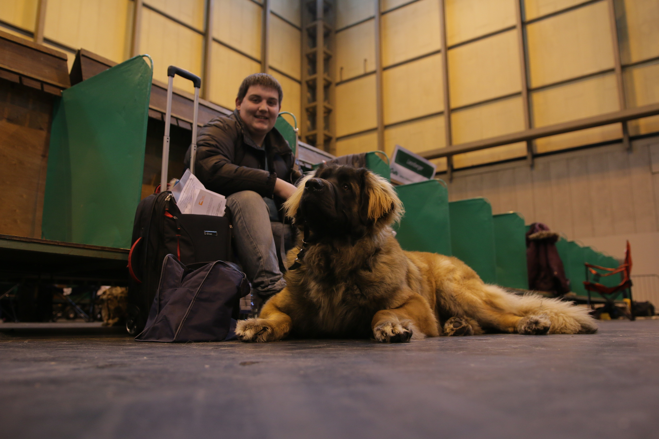 Leonberger waiting