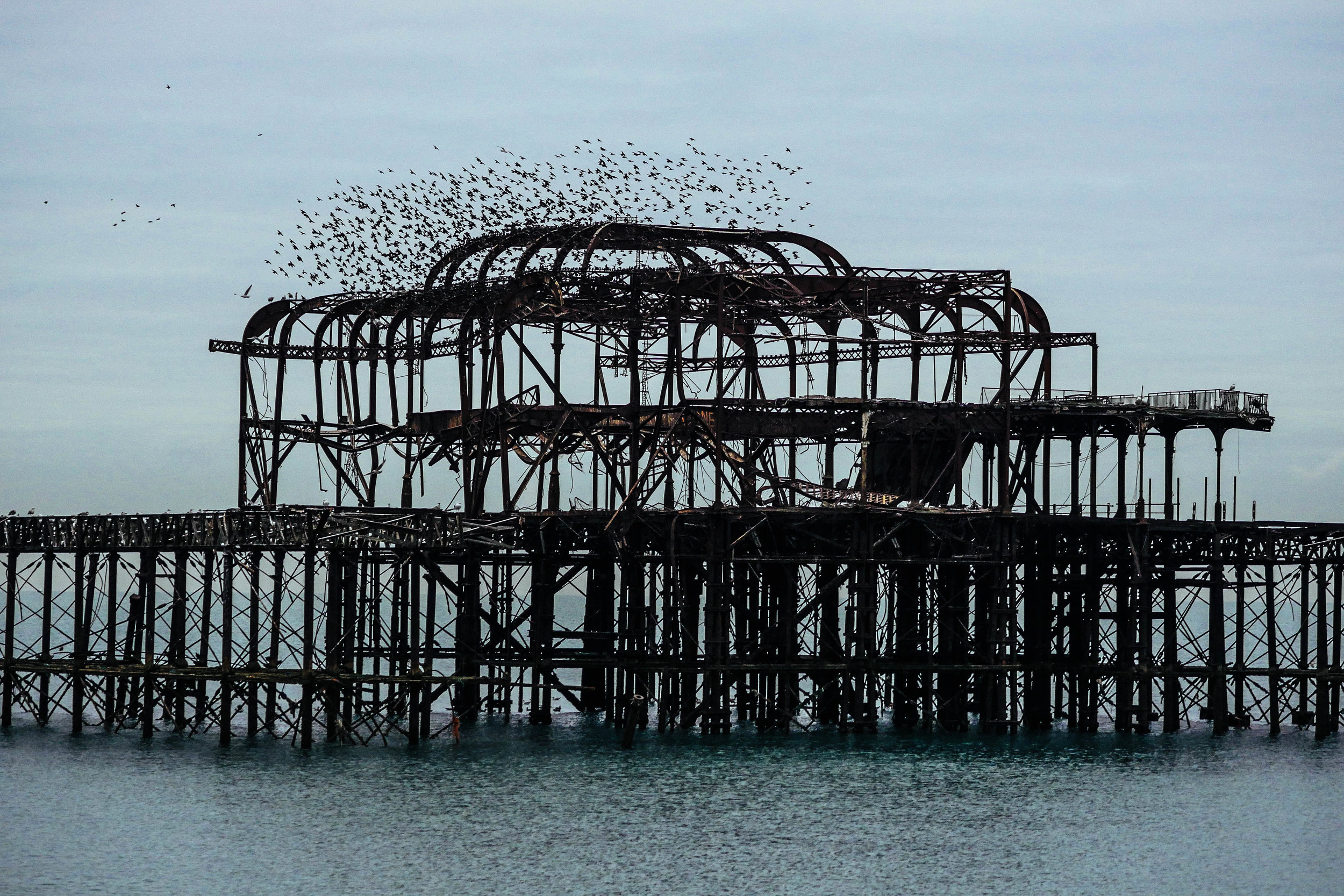 Brighton's home for birds