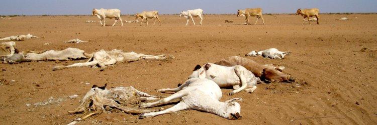 Food crisis in Kenya