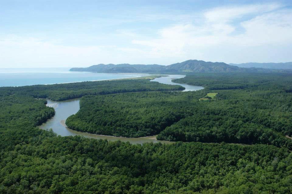 Mangrove swamp surrounding Isla Cana nature reserve.jpg