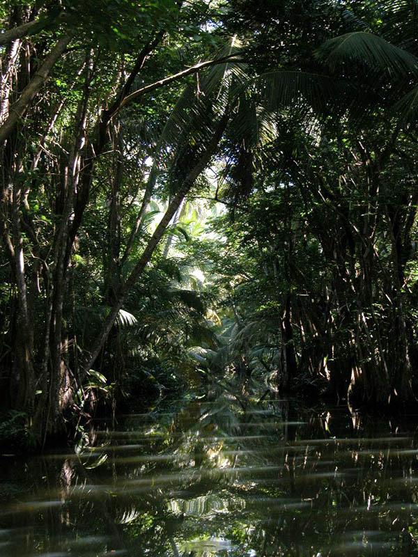 Inside mangrove swamp