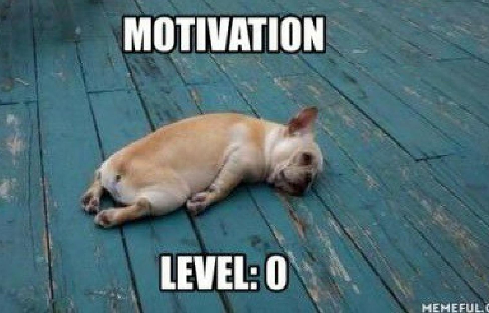 Meme of unmotivated dog