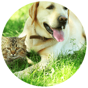 Pet dander and pollen/grass allergies can be stopped
