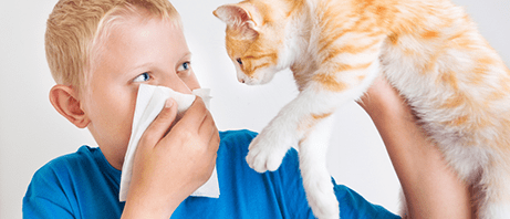 Pet dander allergies can be miserable
