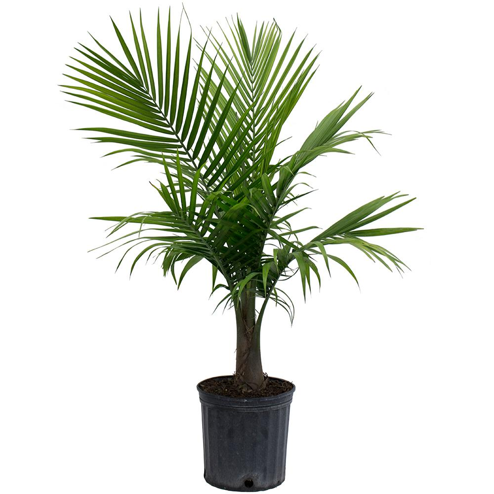 Palm Tree Plant Air Quality