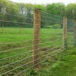 Sheep Fence
