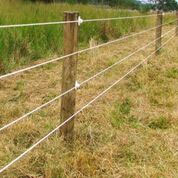 Electric Fence for Goats