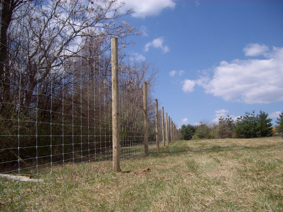 Deer Fence to Keep Deer Out of Gardens