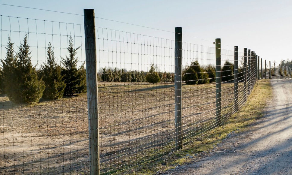 The Best Deer Fence To Keep Deer Out Profence Llc