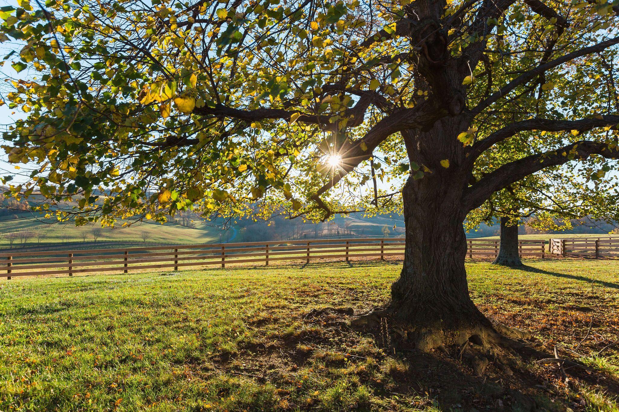 Harrisonburg Fence Company