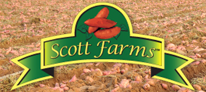 Migrant Workers Settle Case Against North Carolina Sweet Potato Farm for Wage Violations