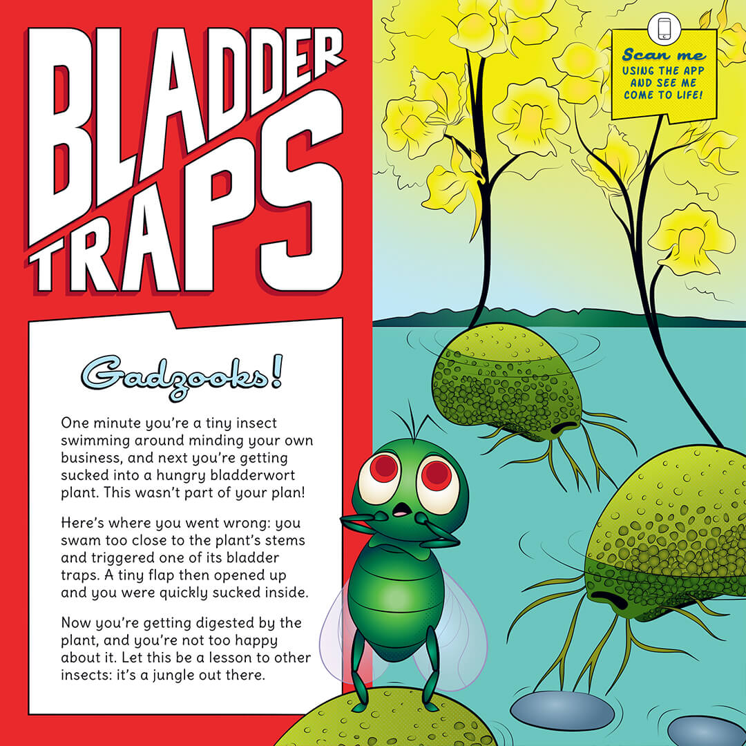 Bladder Traps educational signage design.